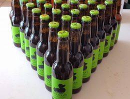 PivoNovice #1