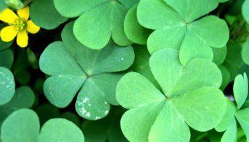 Zakaj sploh ta St. Patrick's Day?