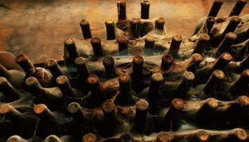 Kako pravilno hraniti in starati pivo?